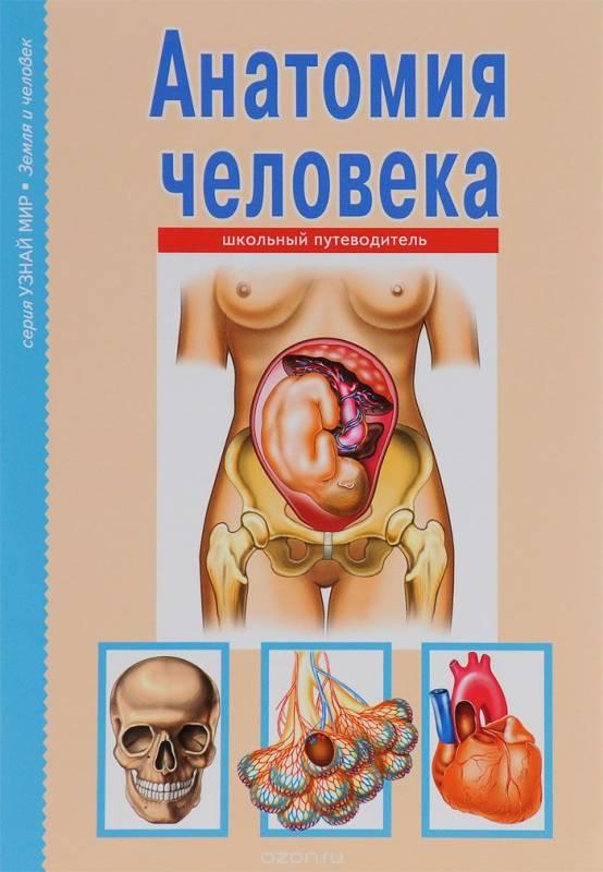 Анатомическая энциклопедия картинках