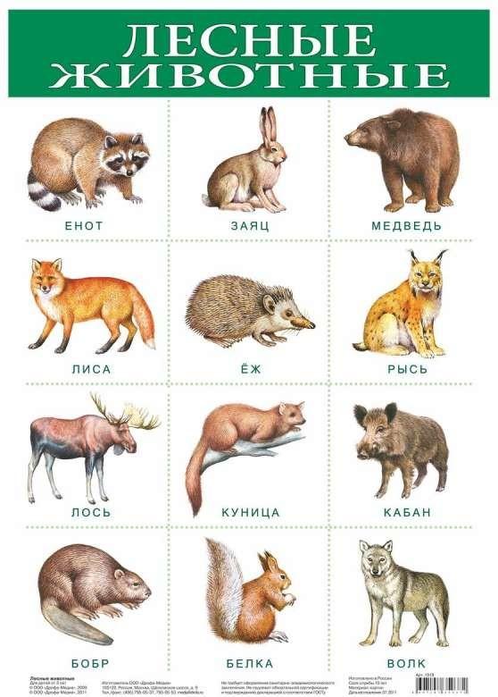Плакат А3 Лесные животные (290 х 420 мм)