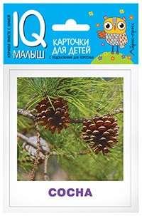 Набор карточек Деревья