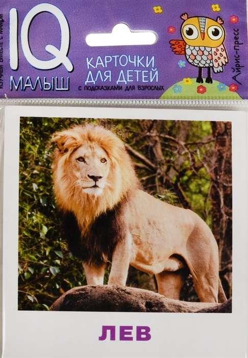 Набор карточек Животные жарких стран