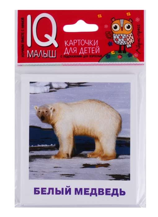 Набор карточек Животные полярных широт